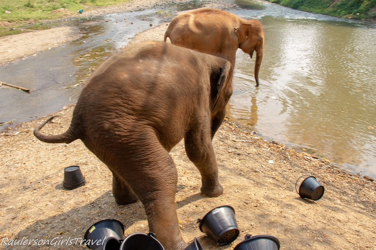 Baby elephant playing with the buckets