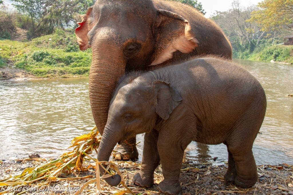 Mom and baby elephant eating