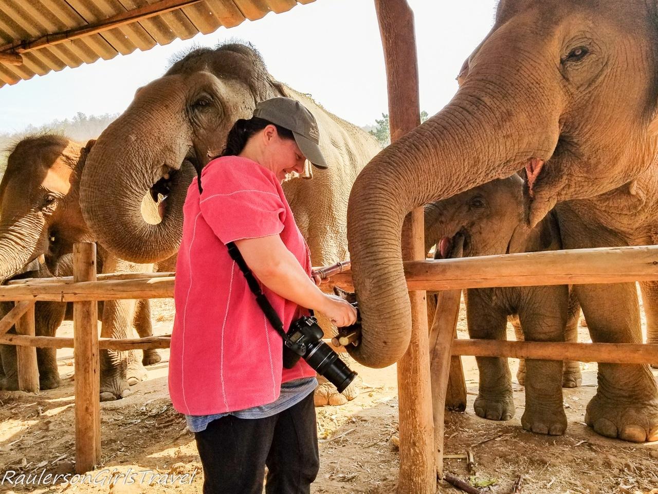 Heather feeding the elephants bamboo