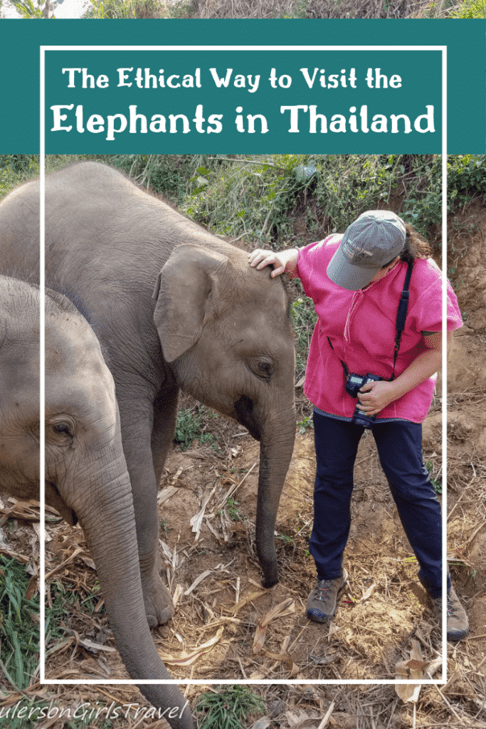 Elephants in Thailand Pinterest Pin