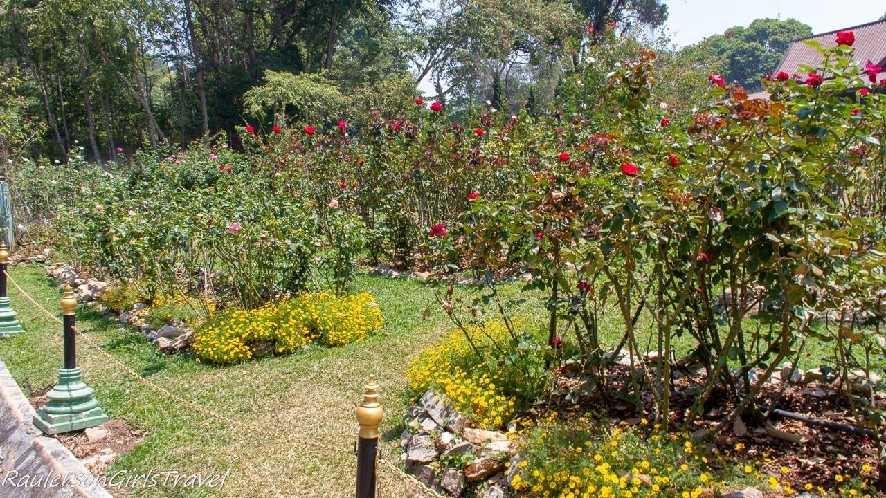 Rose Garden at Bhubing Palace
