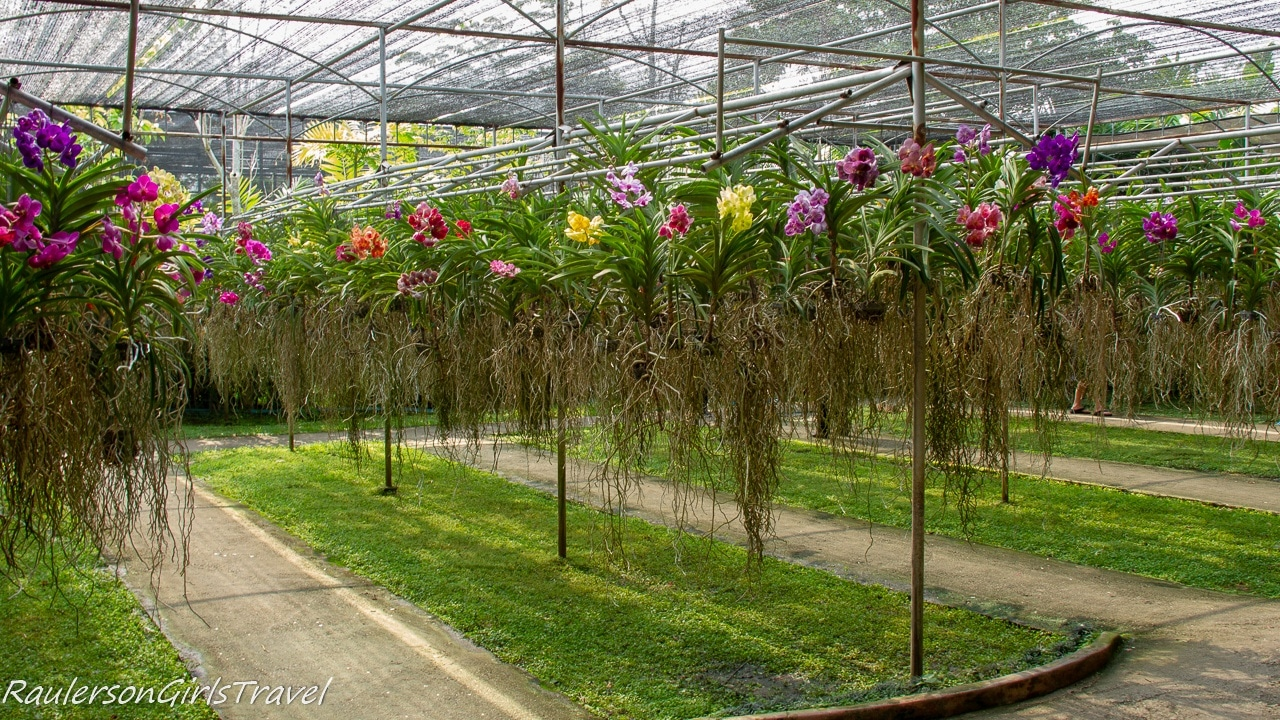 Orchids growing