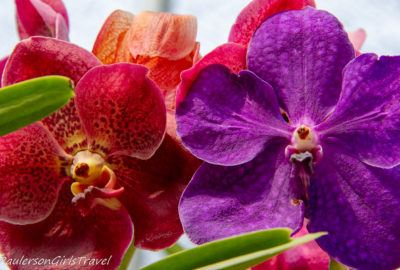 Colorful Orchids at the Bai Orchid and Butterfly Farm