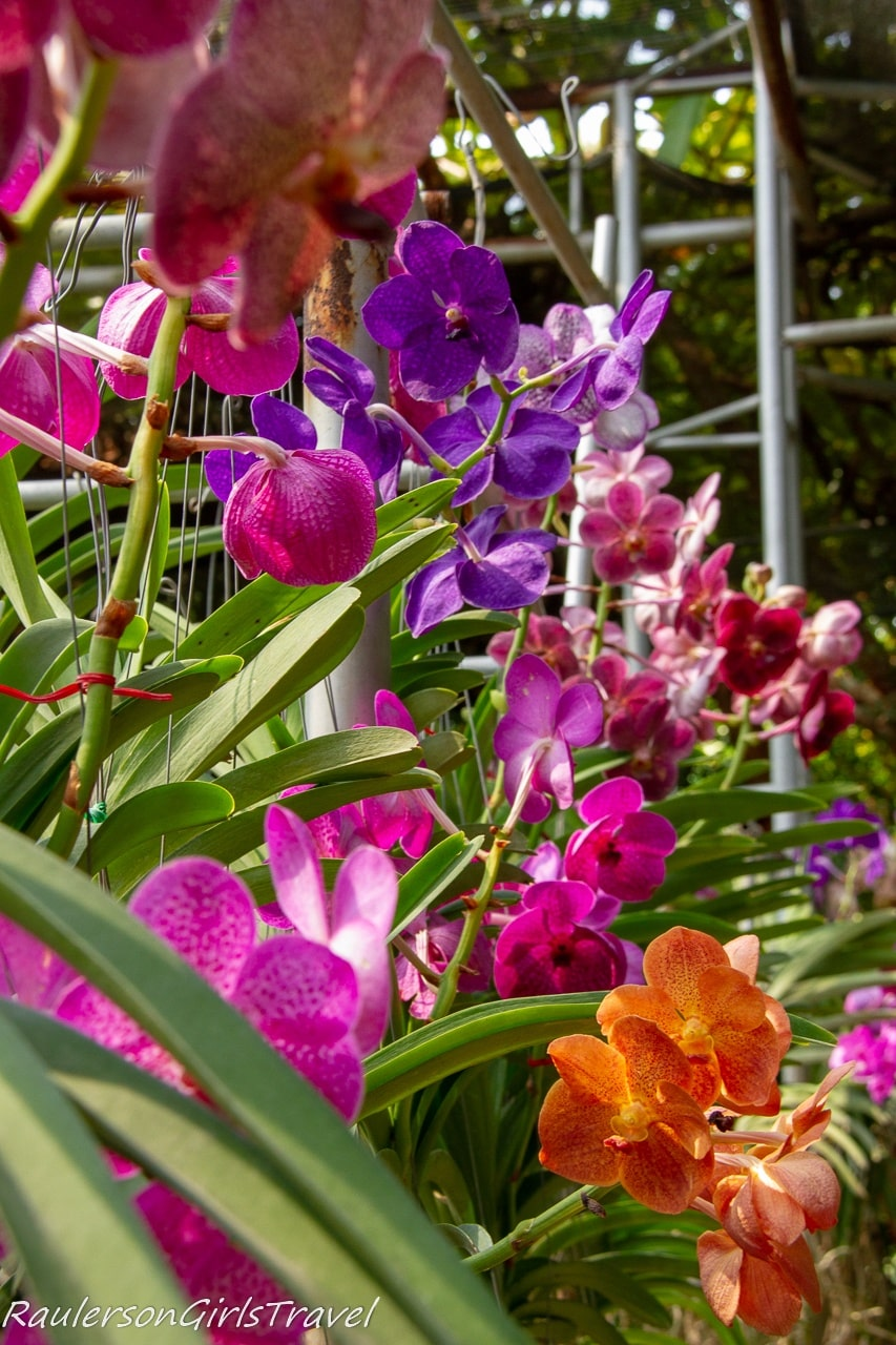 Cluster of colorful orchids