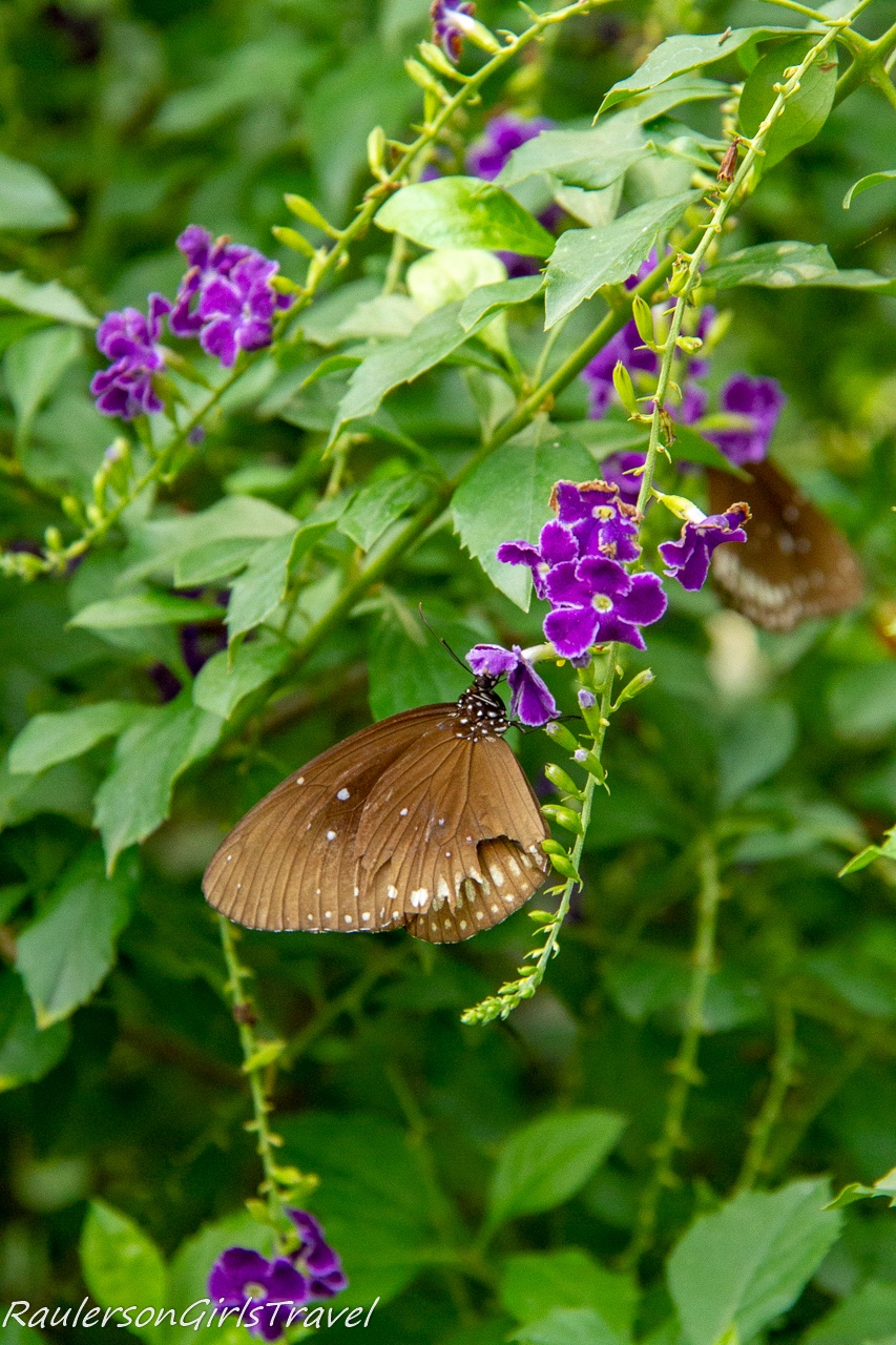 Butterfly with purple flowers