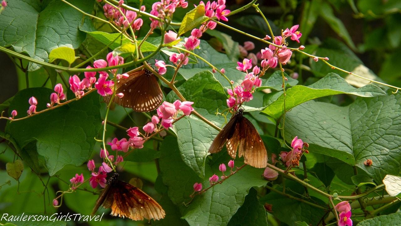 Multiple butterflies on pink flowers