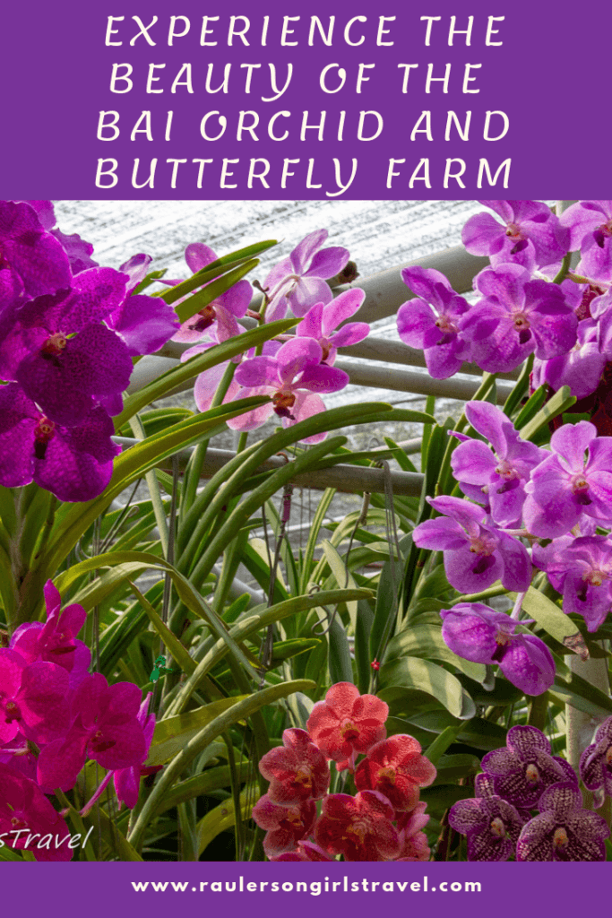 Orchid and Butterfly Farm Pinterest Pin