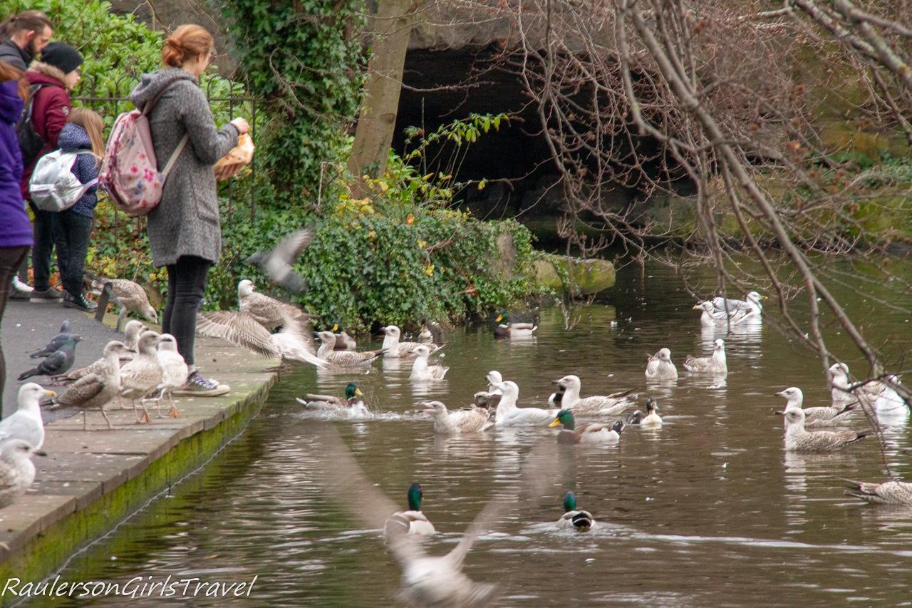 Feeding the ducks at St. Stephens Green
