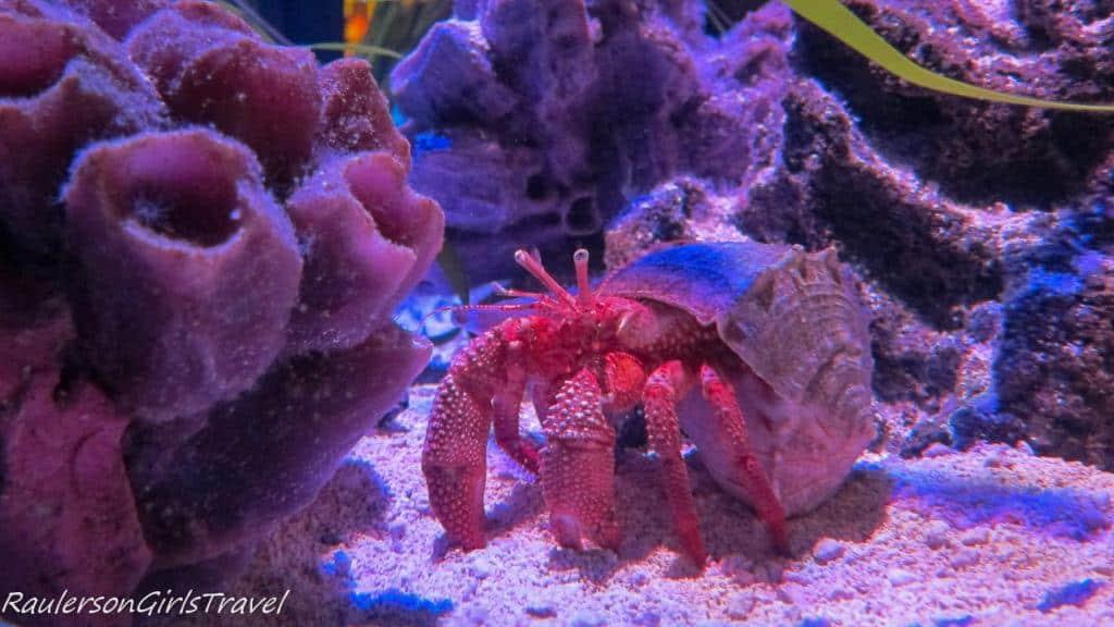 creature at Sea Life aquarium