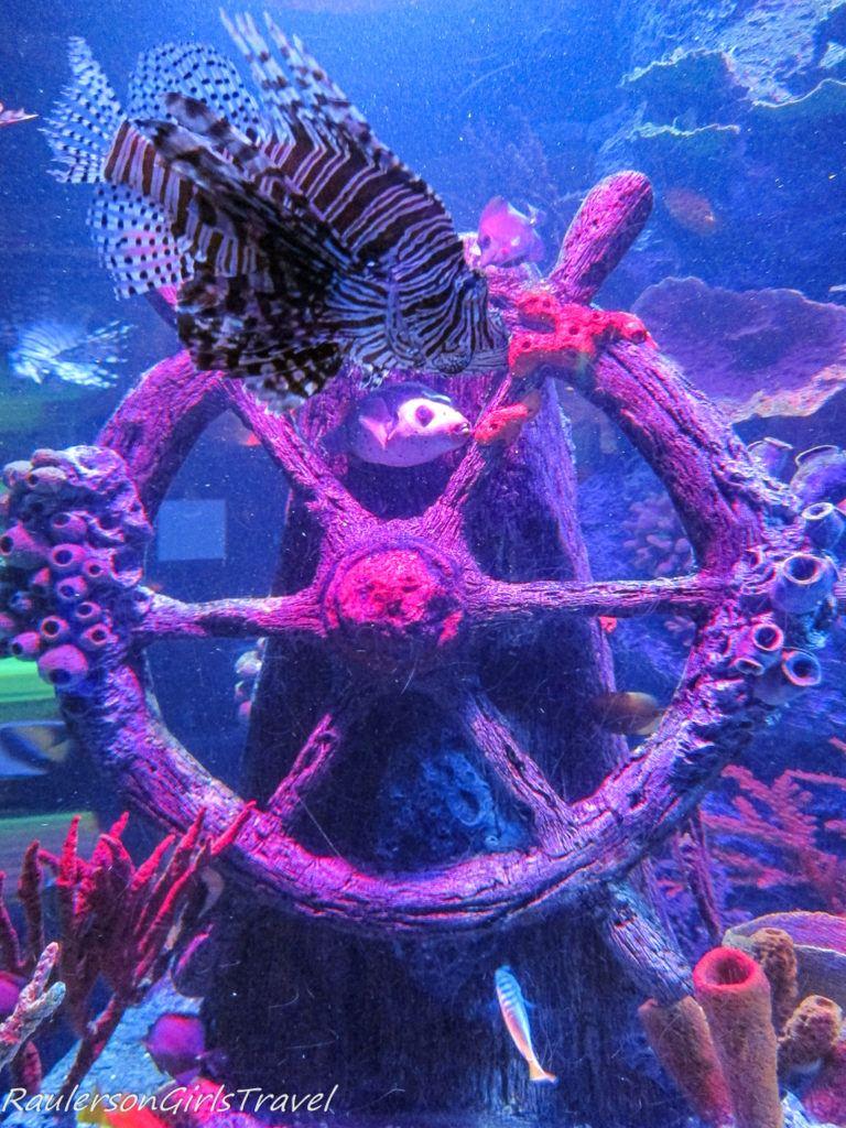 fish with sunken boat at Sea Life aquarium