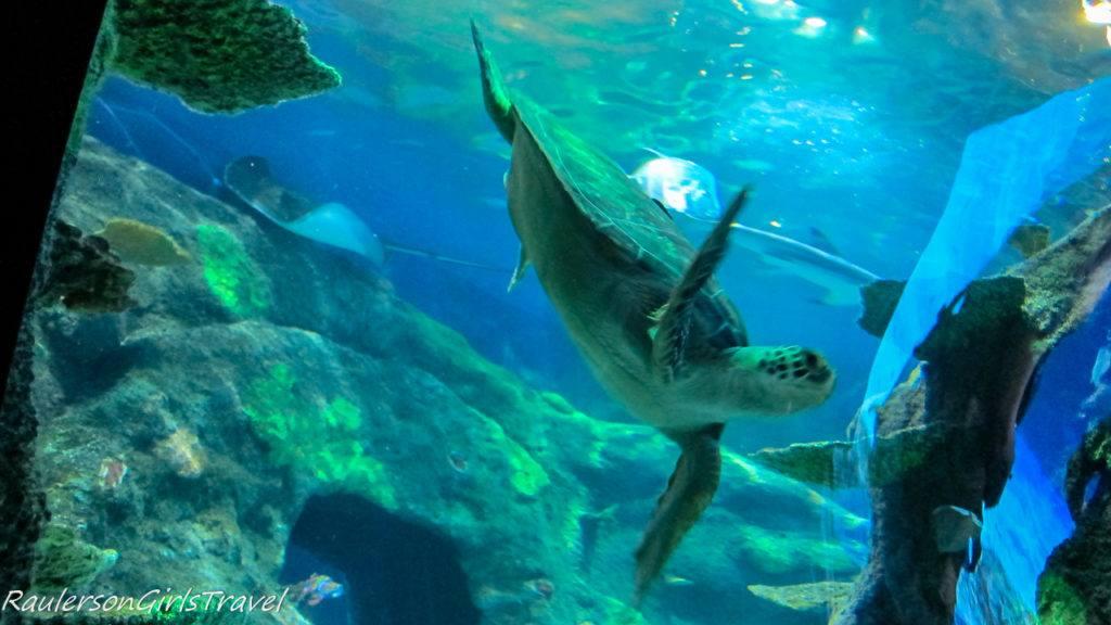 turtle in TROPICAL OCEAN EXHIBIT