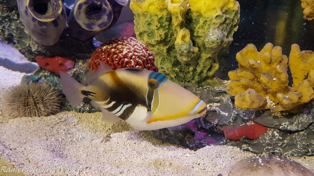 colorful fish with coral at Sea Life aquarium