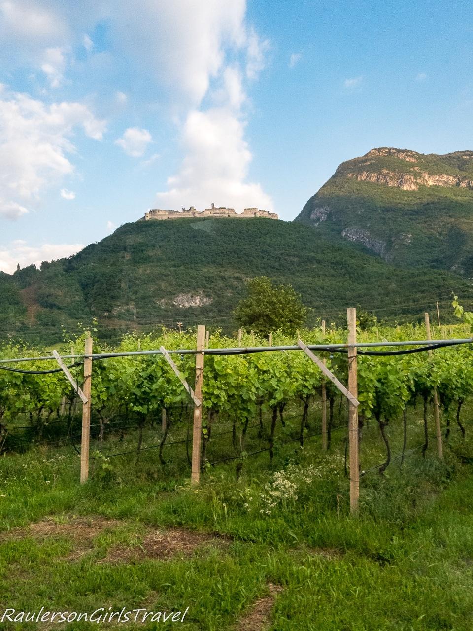 Vineyards in Trento
