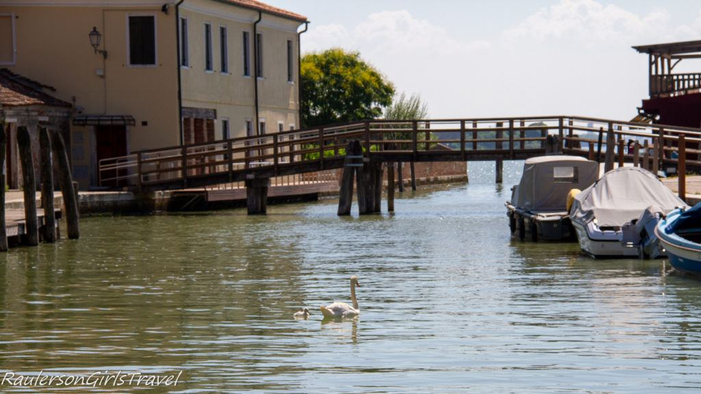 Mom and baby swan in the canal at Mazzorbo