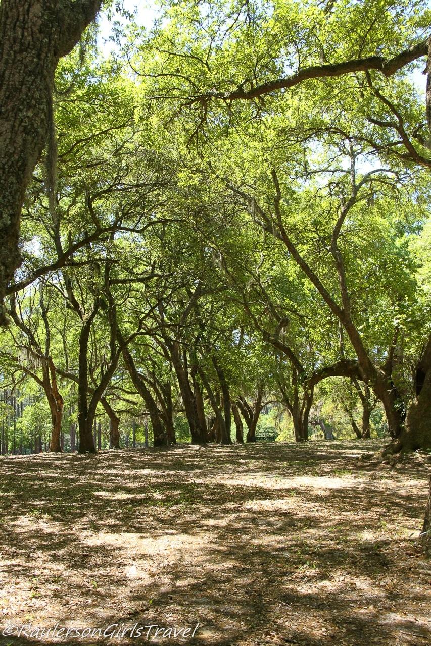 Trail in BrookGreen Gardens