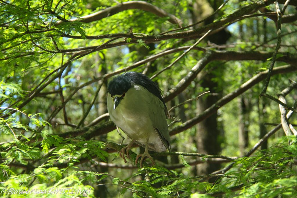 Bird at BrookGreen Gardens
