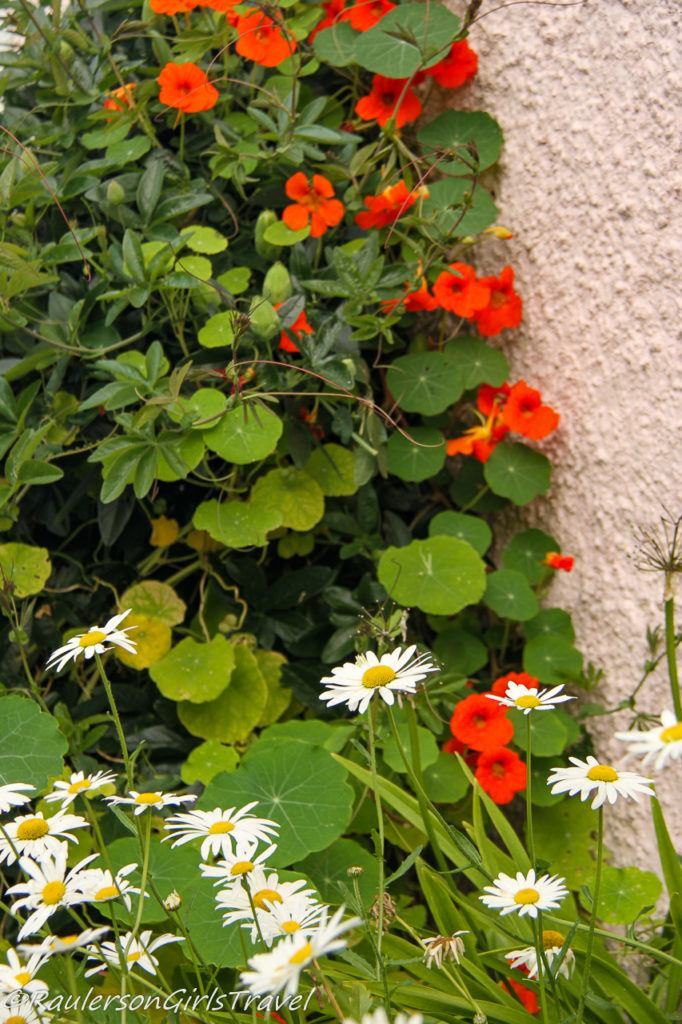 Red and White Flowers by stone wall