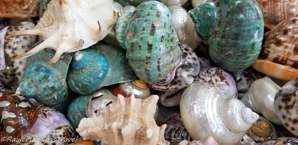 Colorful Shells in Cameo/Coral Factory in Naples, Italy