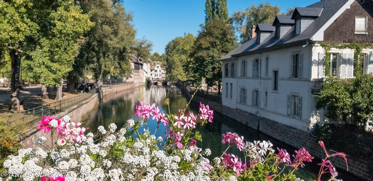 Pink and white flowers along the canal in Strasbourg