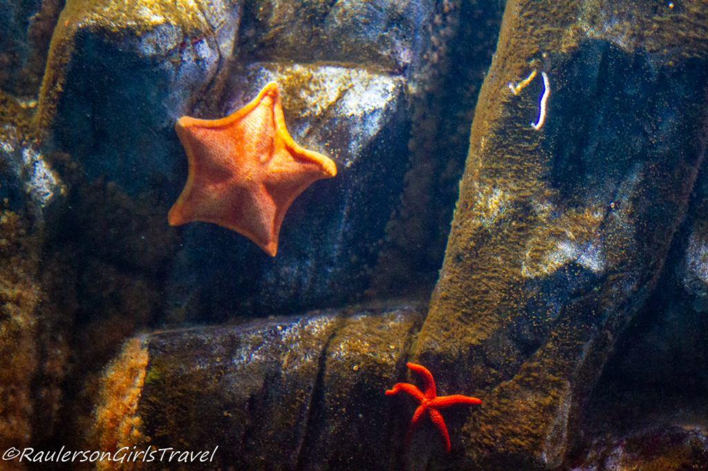 Starfish on rocks