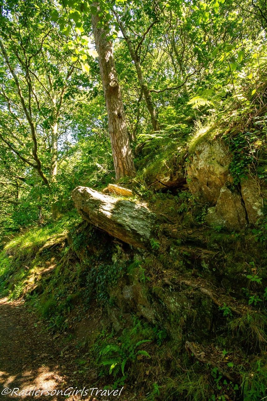 Tree stump in the Dingle
