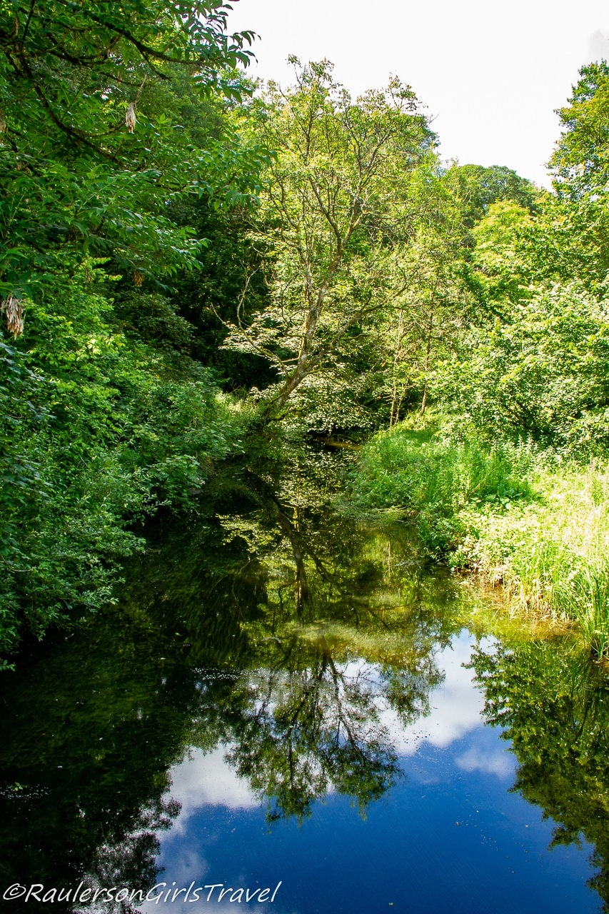 Trees reflected in water in the Dingle Nature Reserve