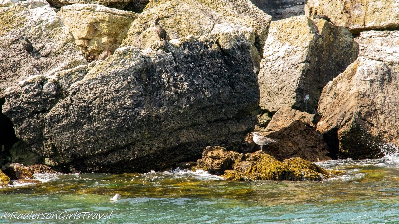 Seal and Birds on Puffin Island