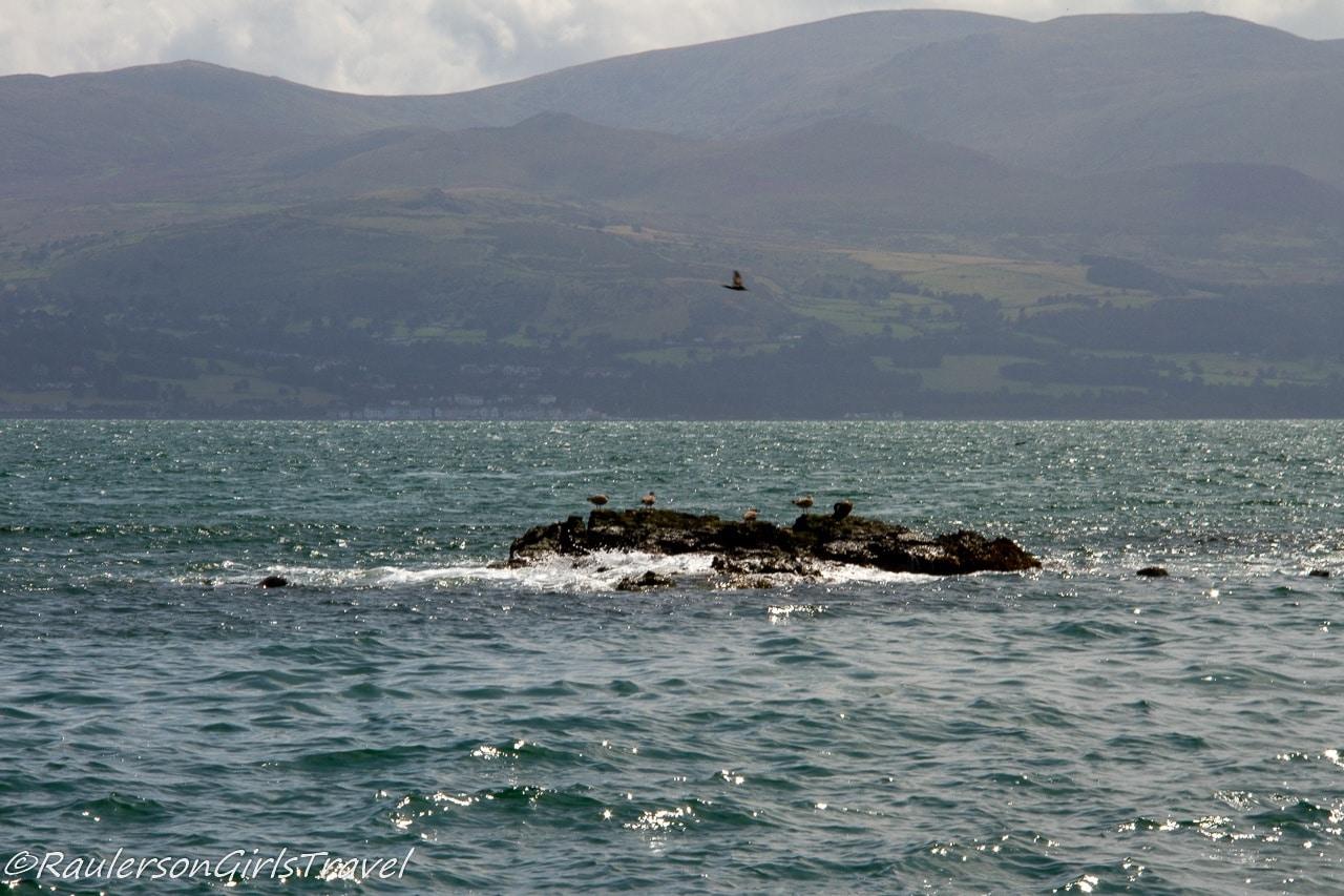 Three Seals by Puffin Island