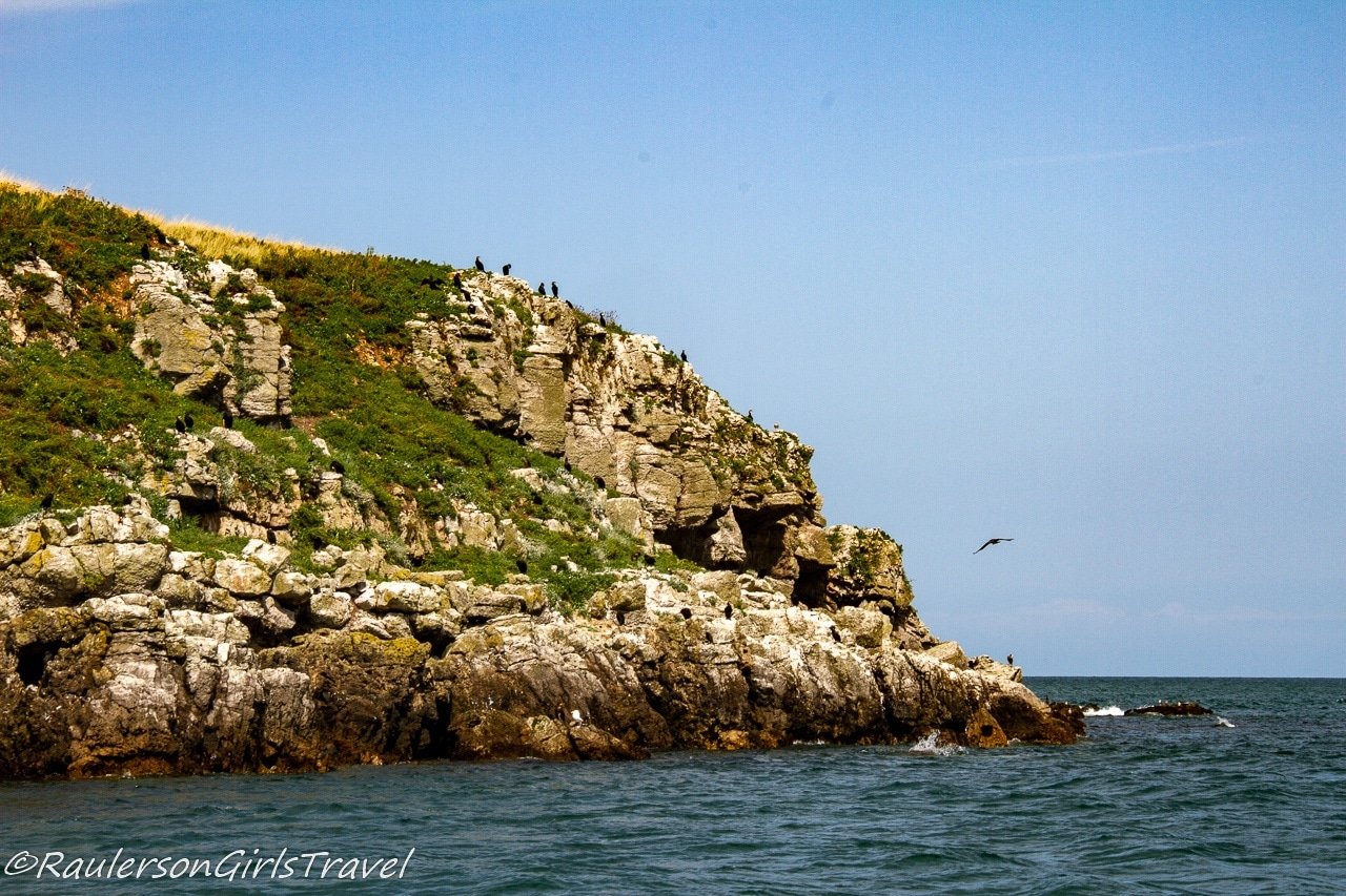 East end of Puffin Island with Birds Perched and Flying