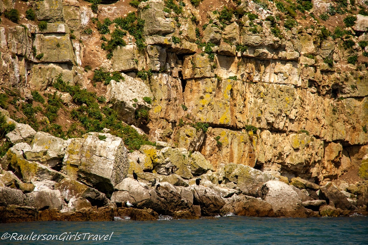 Birds on the rocks of Puffin Island