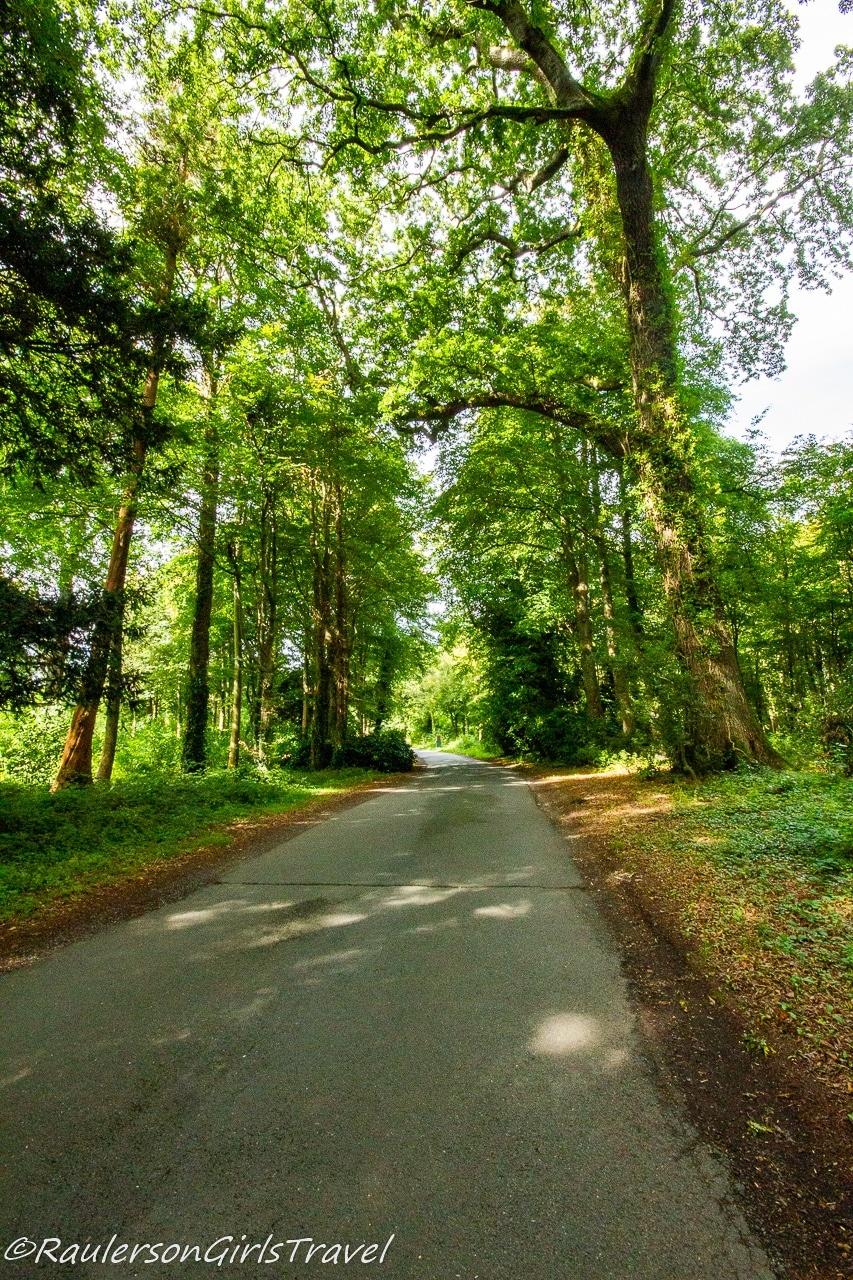 Driveway to Penrhyn Castle