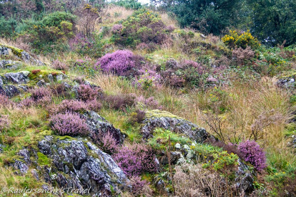 Colorful flowers in Snowdonia National Park