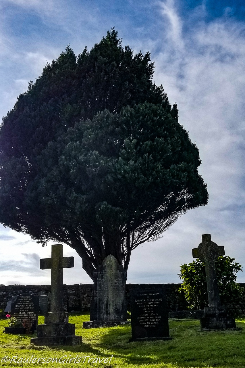 Old gravestones in front of a tree