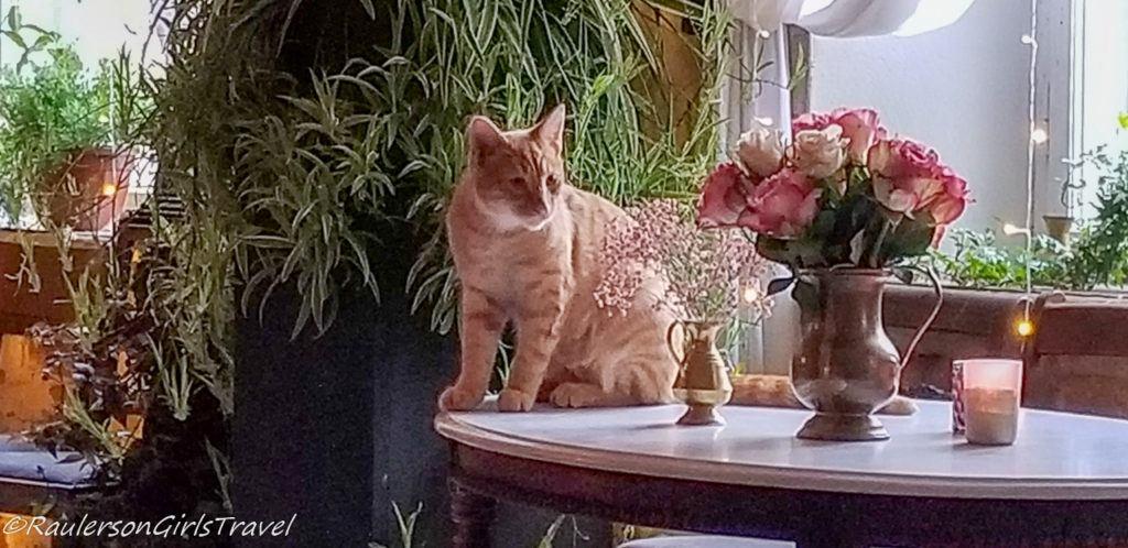 Cats in Abgunste Manor