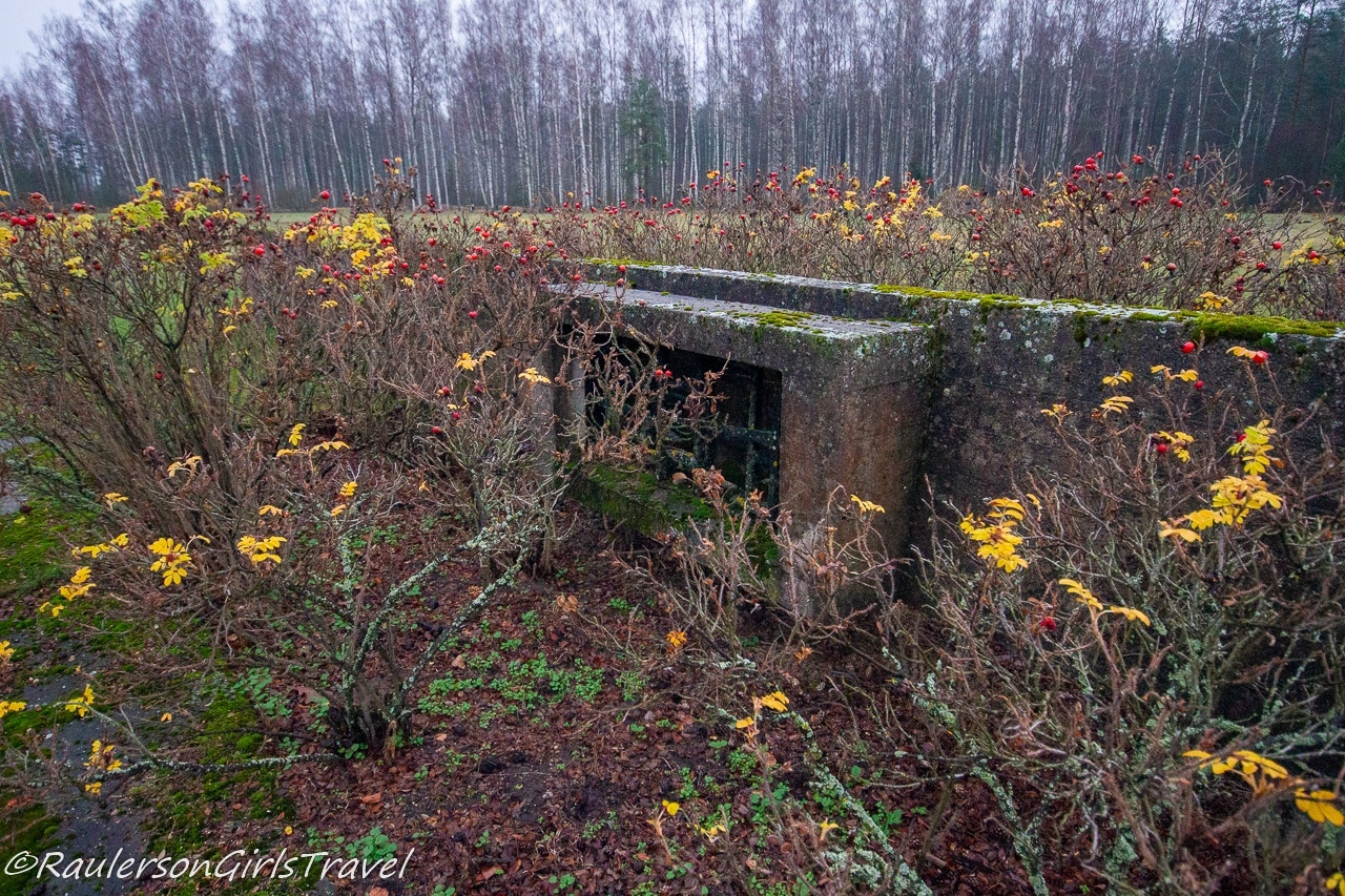 Plants growing around the Foundations left from the Salaspils Barracks