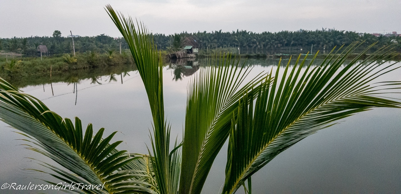 Palm frond in front of water farm