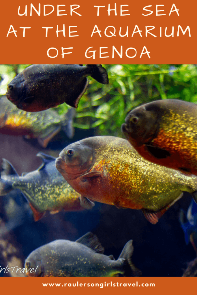 Aquarium of Genoa Pinterest Pin