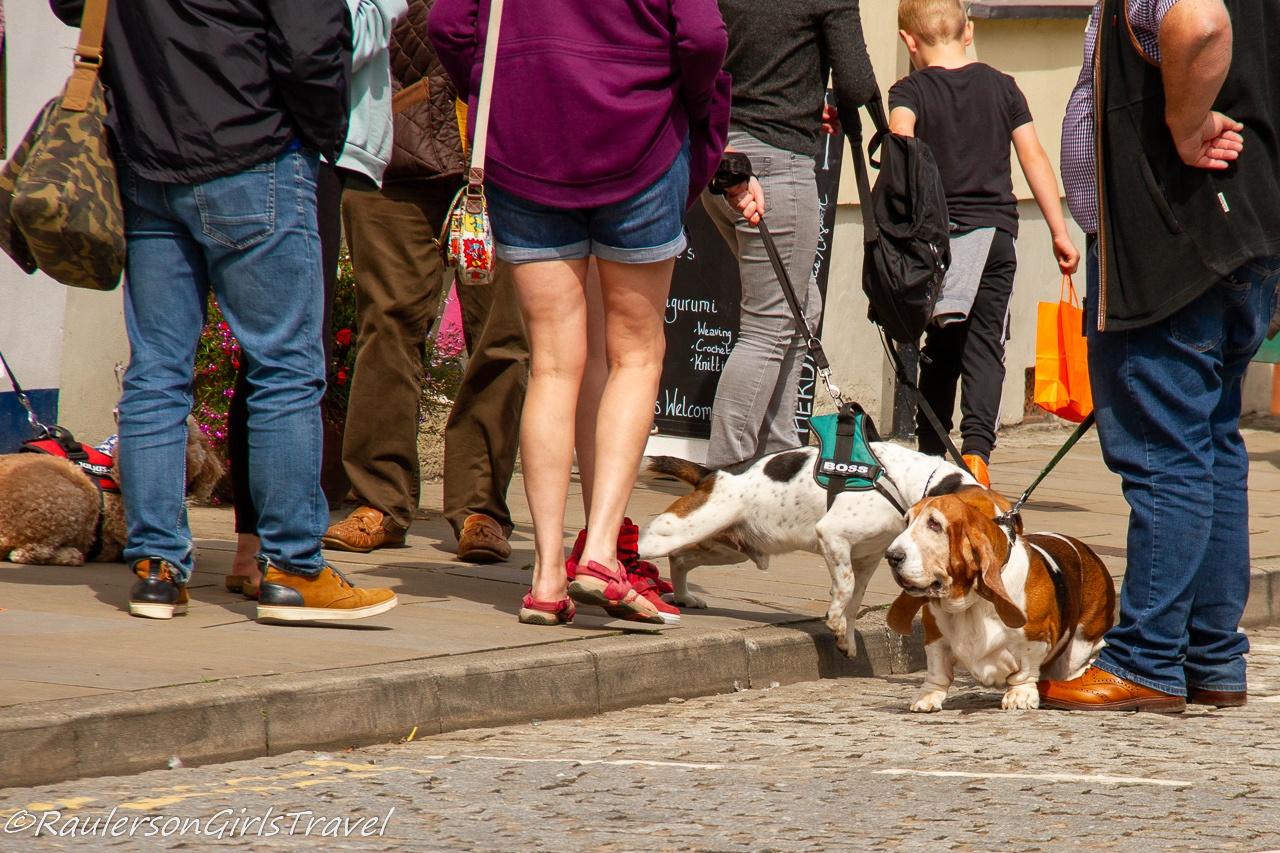 Dog-Friendly Beaumaris