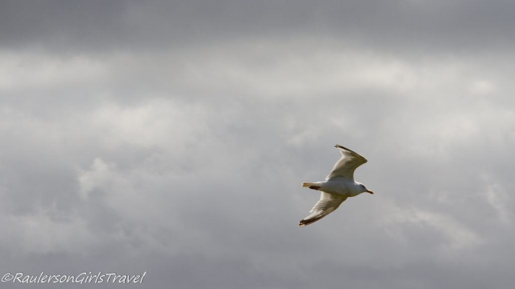 Bird flying in the air