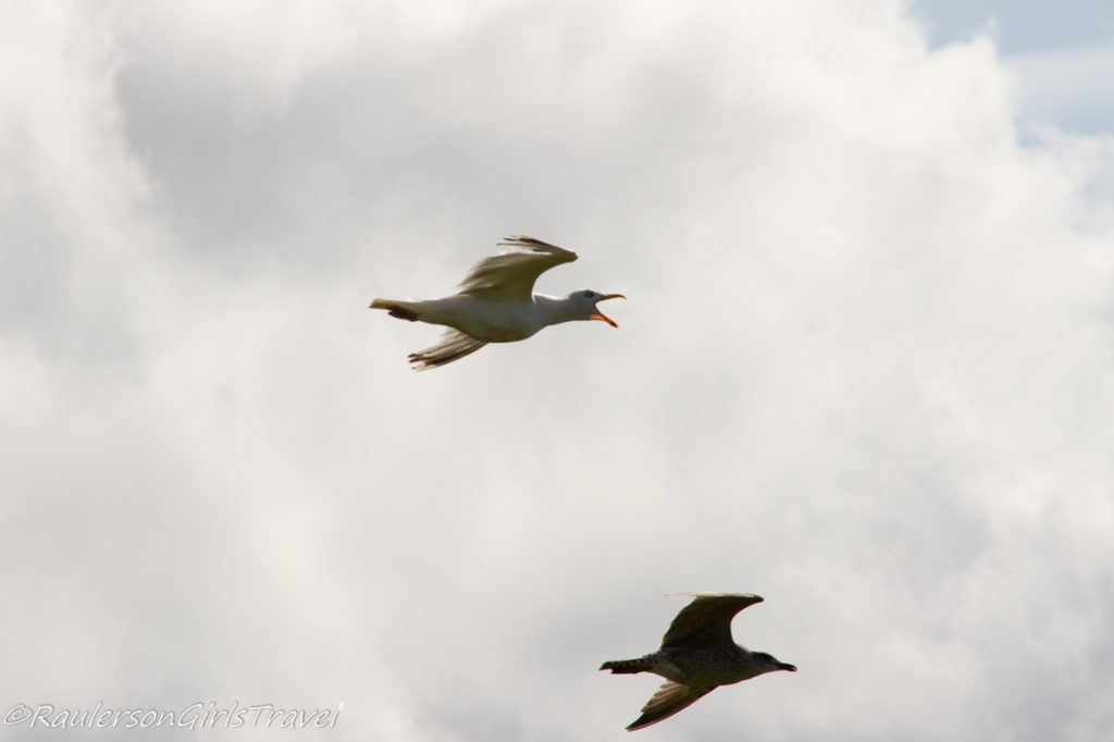 Two birds flying in the air