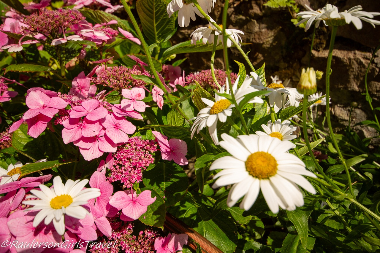 White daisies and pink flowers