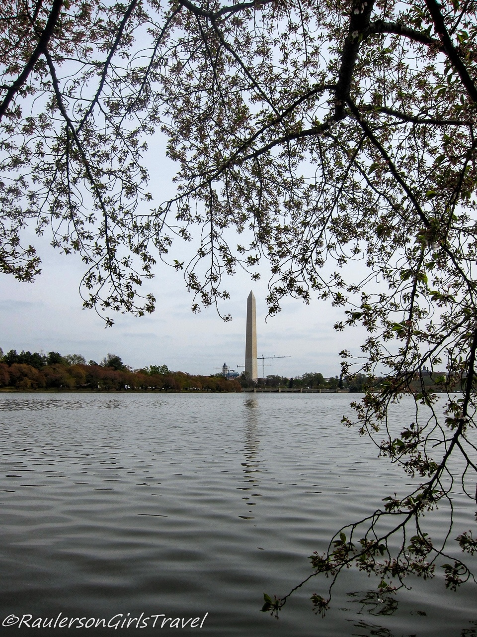 Washington Monument Reflected with White Cherry Blossom Trees