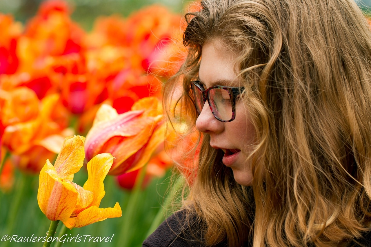 Madison smelling Orange and yellow Fosteriana Tulips