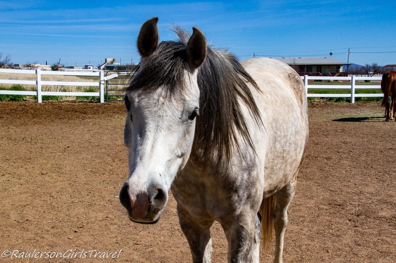 Finn Horse Selfie