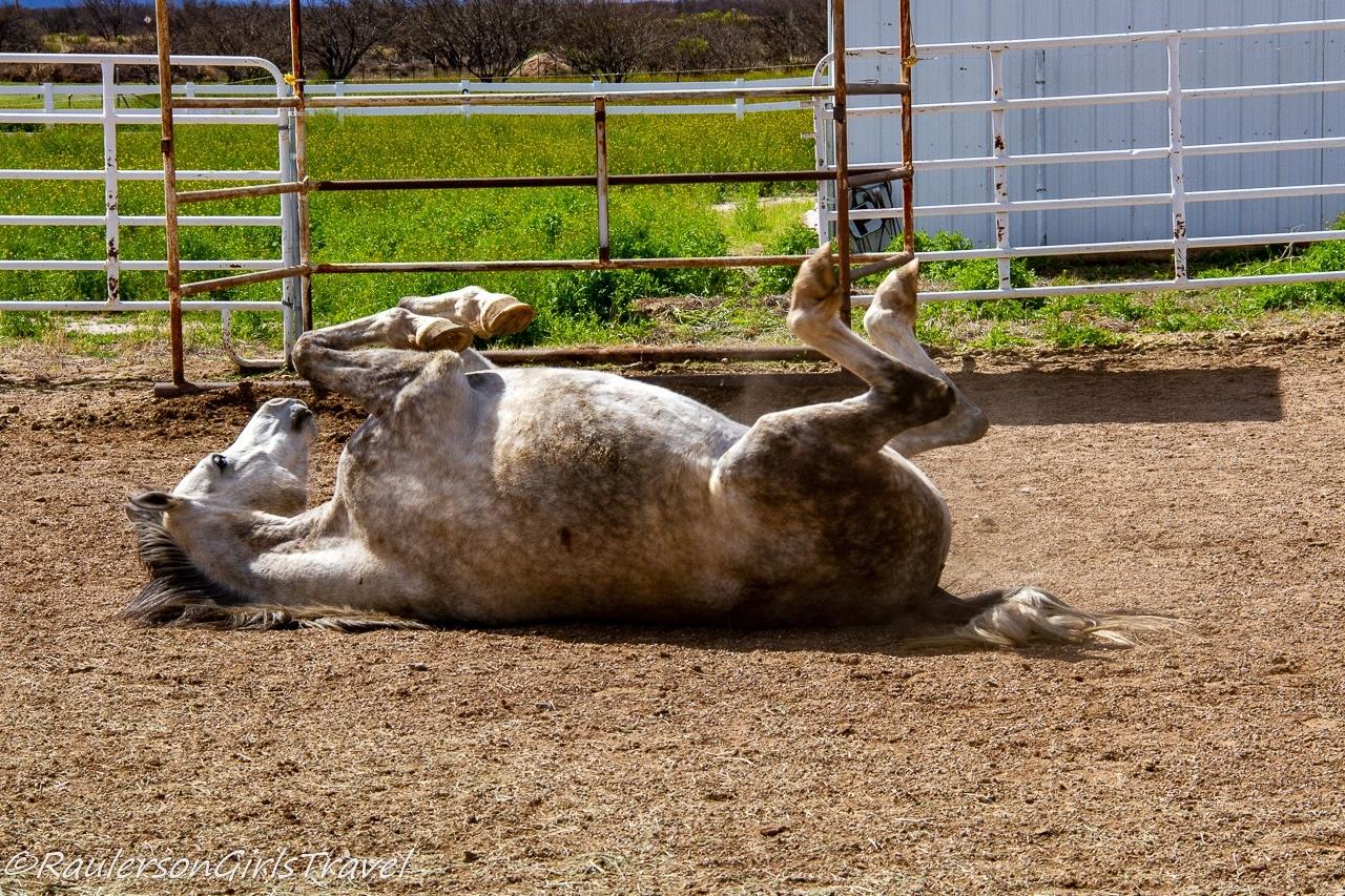 Finn upside down rolling in the dirt