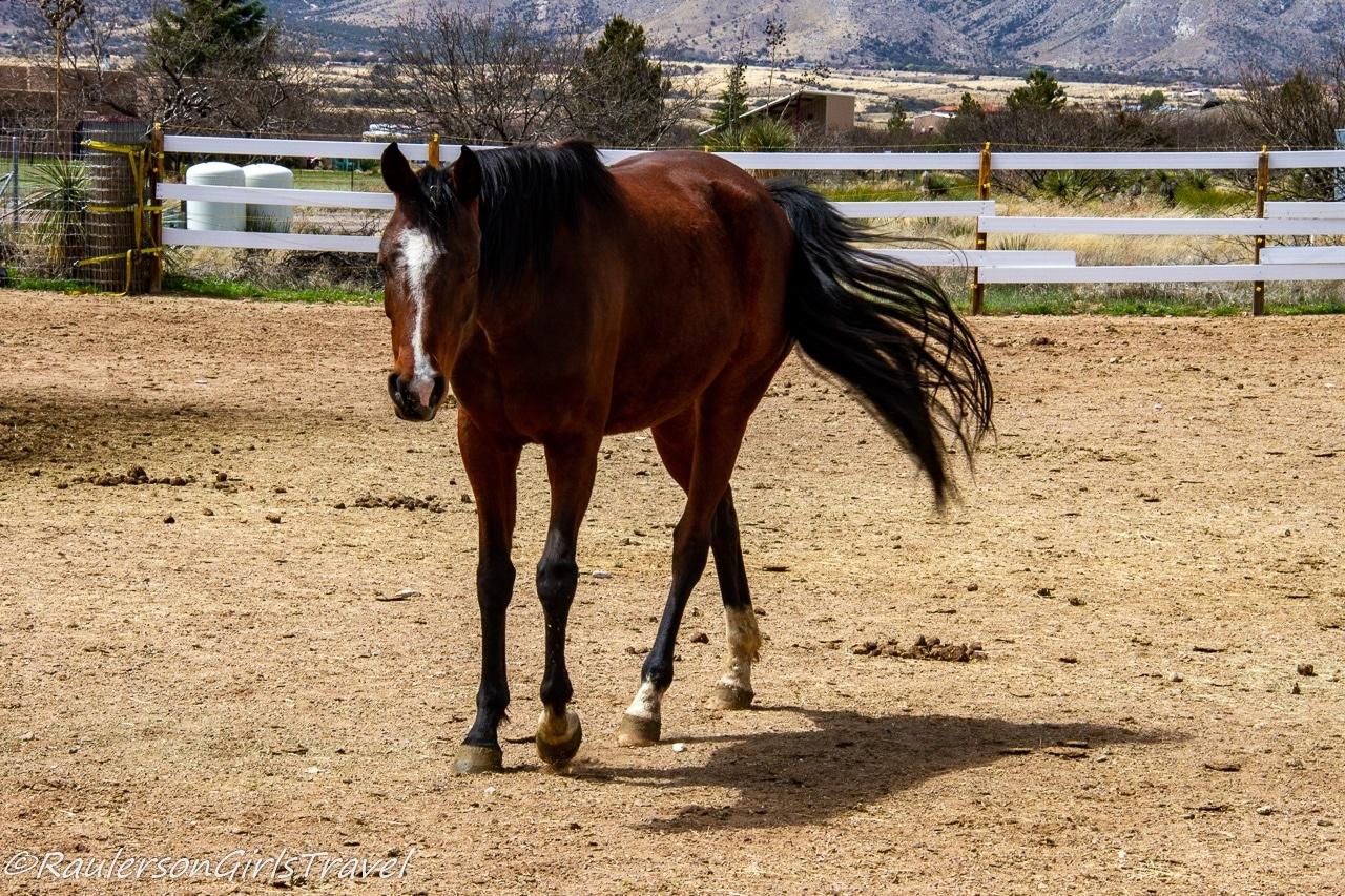Tina at Auld Macdonald Farm Arabians