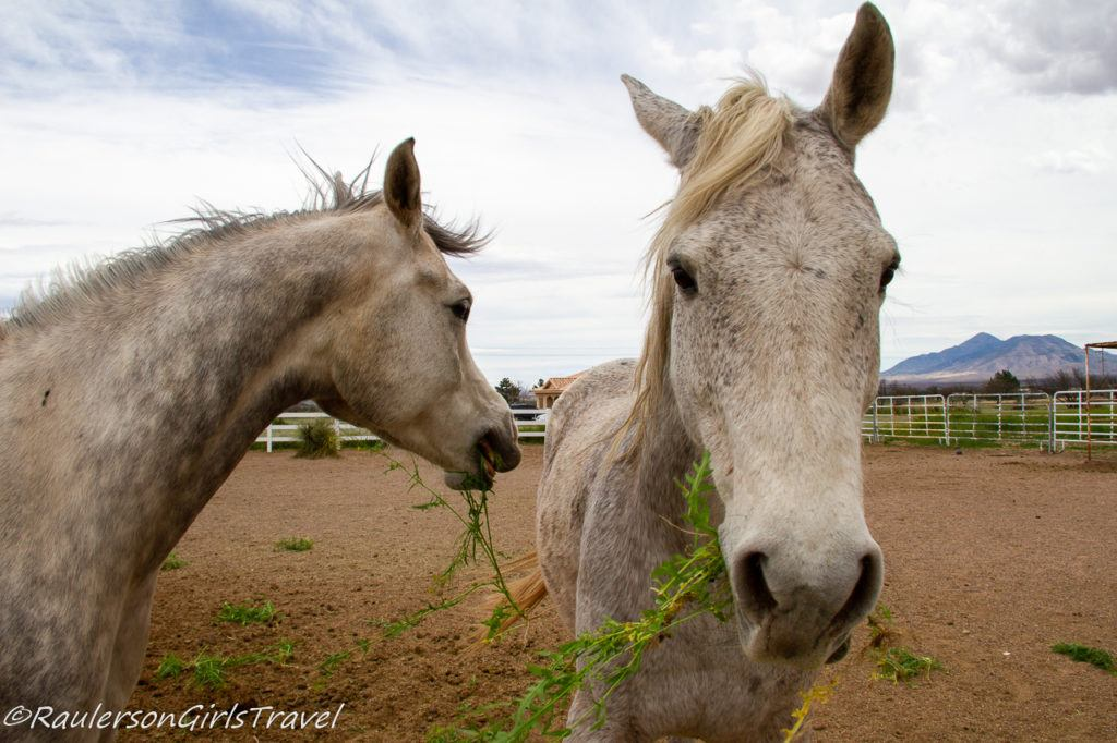 Finn and Harry snacking on weeds