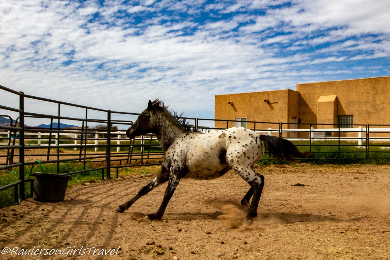 Fred running in the round pen