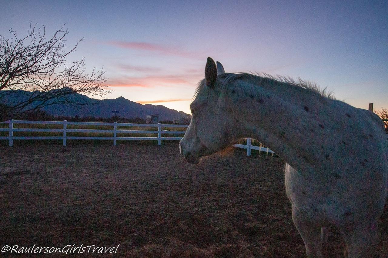 Hannah looking at the Arizona sunset