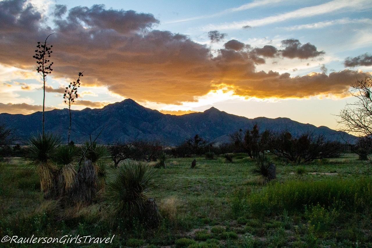 Arizona Sunset at Auld Macdonald Farm Arabians